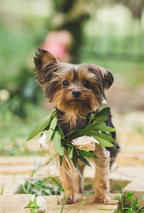 Pets-in-Weddings-Analisa-Joy-Photography