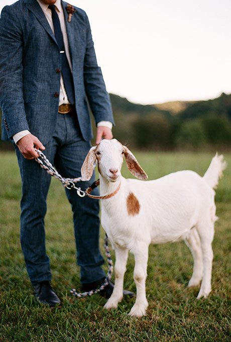 Pets-in-Weddings-Bamber-Photography