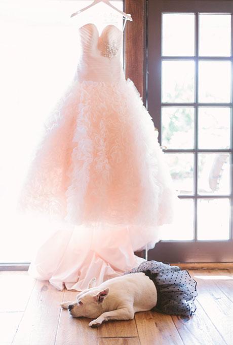 Pets-in-Weddings-Katie-Shuler