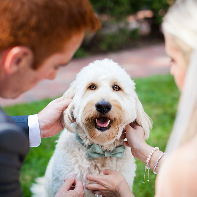 Pets-in-Weddings-Kim-Thiel-Photography