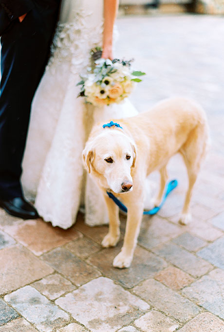 Pets-in-Weddings-Leo-Patrone-Photography