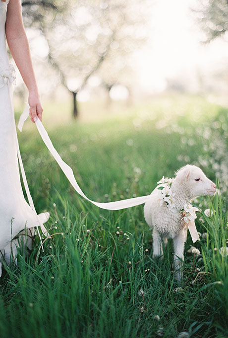 Pets-in-Weddings-Weber-Photography