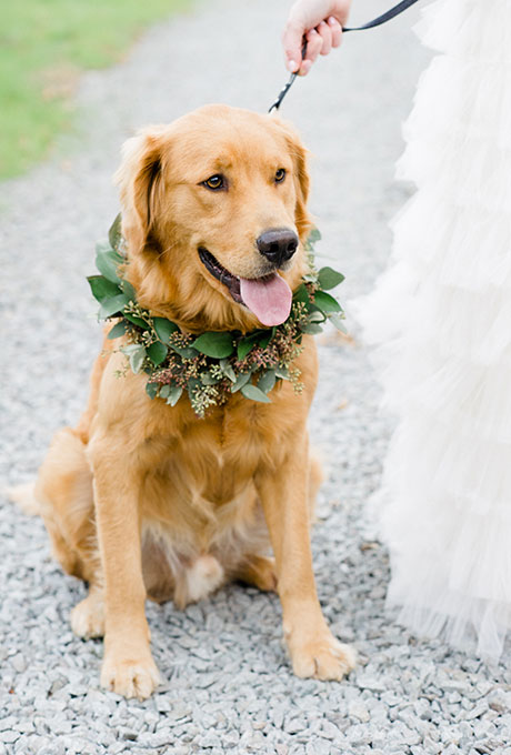 Pets-in-Weddings-Caroline-Lima-Photography