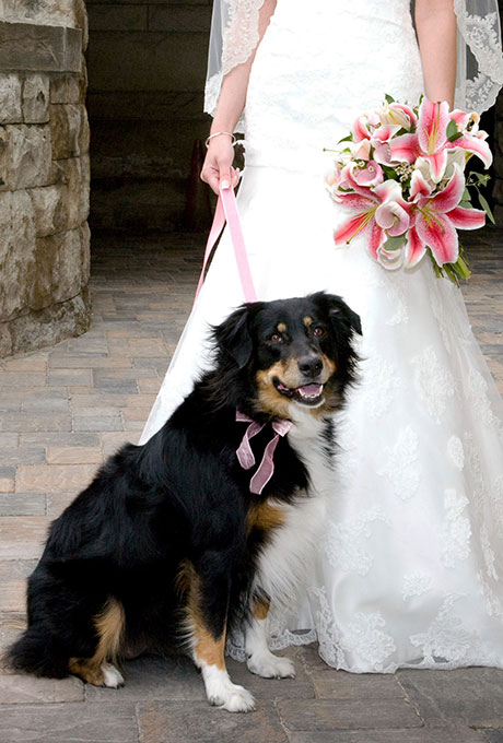 Pets-in-Weddings-Tana-Photography-2