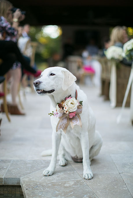 Pets-in-Weddings-Taylor-Lord